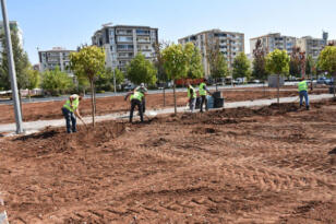 Diyarbakır'a özgü ağaçlar bu parkta yetiştirilecek!