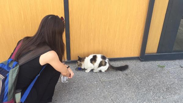Hayvansever genç kızdan alkışlanacak hareket