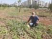 VİDEO HABER – Kent içi tarımın ilk ürünleri ihtiyaç sahiplerine