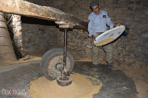 VİDEO HABER – Kursunç pirinci asırlık su değirmeninde öğütülüyor