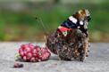 Hevsel'in kelebekleri Hong Kong'da